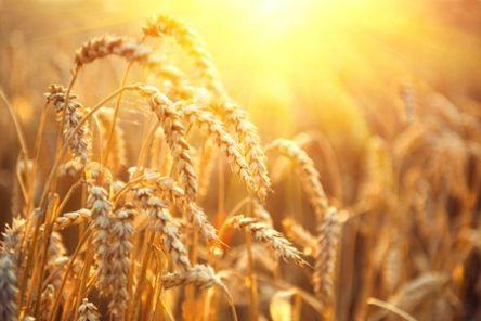 Jouw oogst