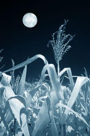 Volle maan in september groeikansen